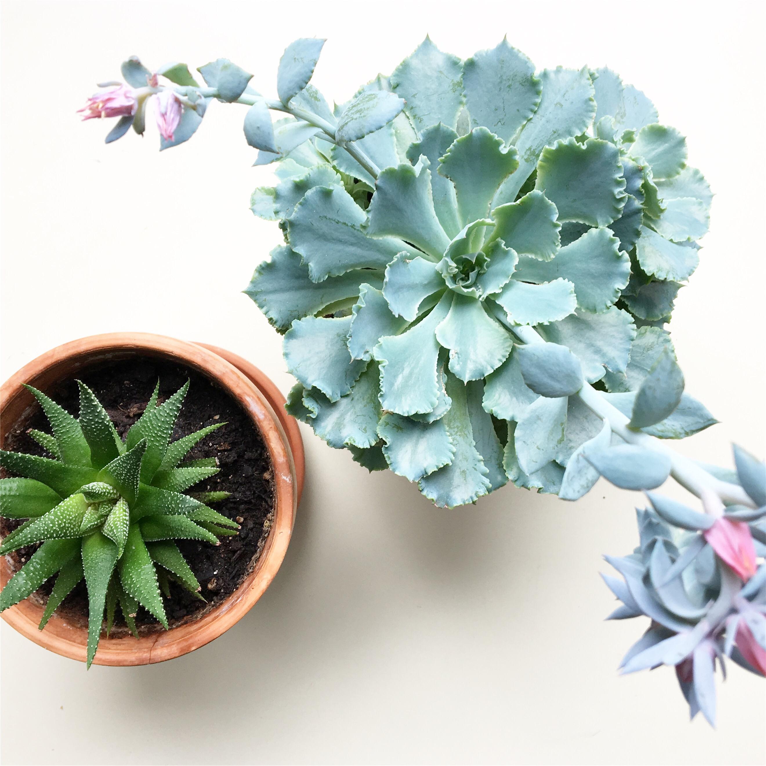 low maintenance indoor plants u2013 aloe u0026 aster